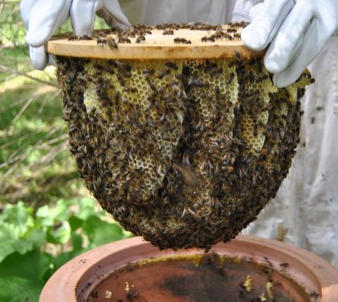Comment aborder cette problématique qui mène la vie dure aux abeilles.