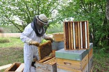 Le concept du «Lien de chaleur parfumée de la ruche»